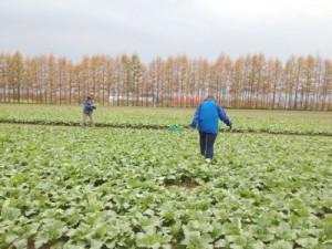 北海道十勝地方で行った現地調査にて(2014年10月)